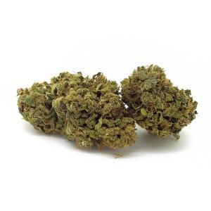 Comprare Cannabis Light - La Scelta Migliore per Prodotti a Base di Erba Legale.