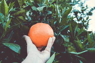 arance di ribera siciclia